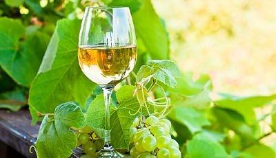 Traducción en el sector vitivinícola
